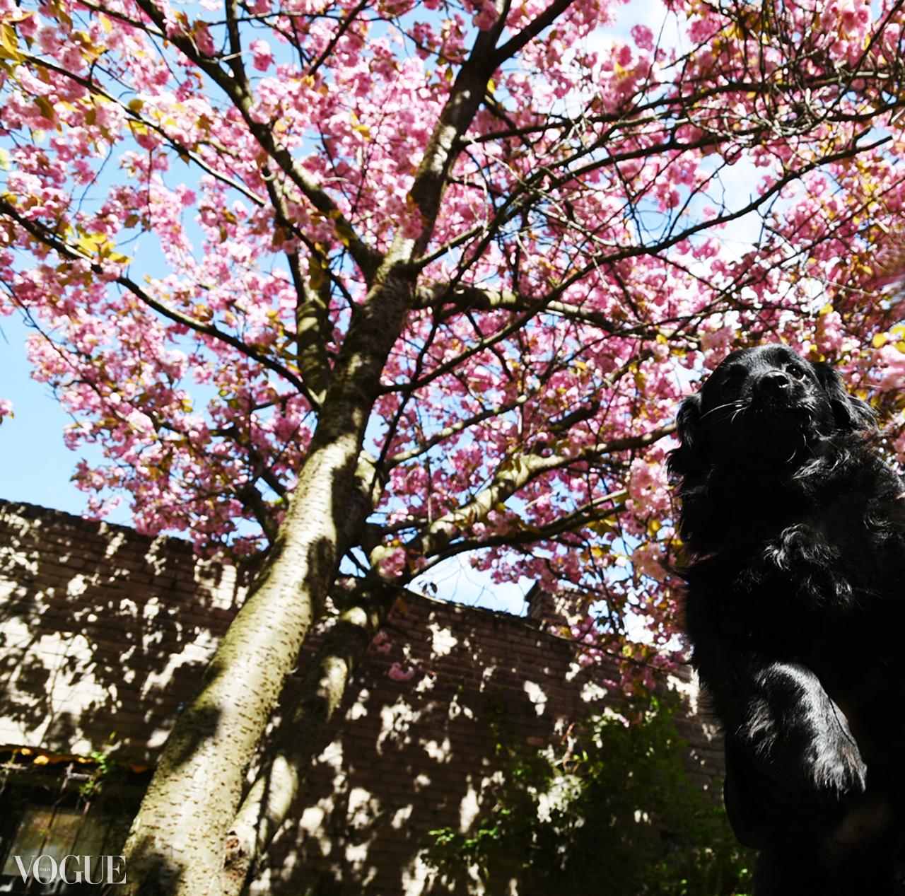 BEAR ON VOGUE ITALIA'S PHOTOVOGUE